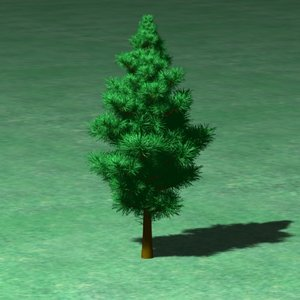 short pine tree 3d model