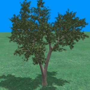 large maple tree 3ds