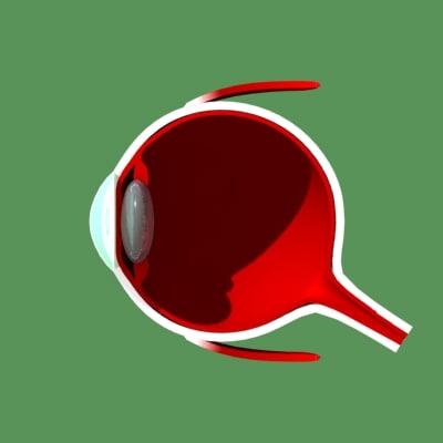 eye section 3d model