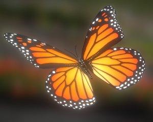 3d butterfly 01