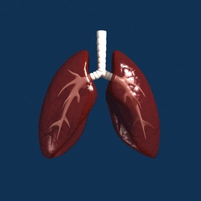 lungs internal 3d max