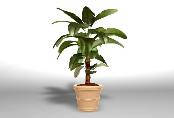 potted palm tree obj