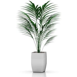 3d stylish palm model