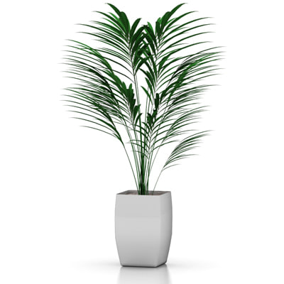 3d stylish palm model