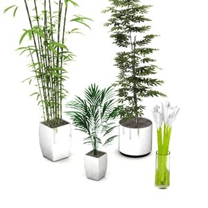 stylish potted plants 3d model