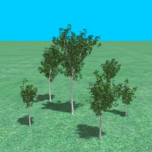 3ds grove maple trees