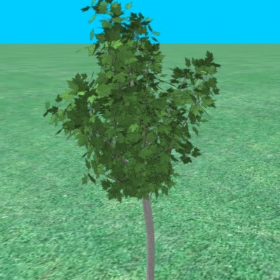 small maple tree 3ds