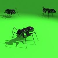 ants obj