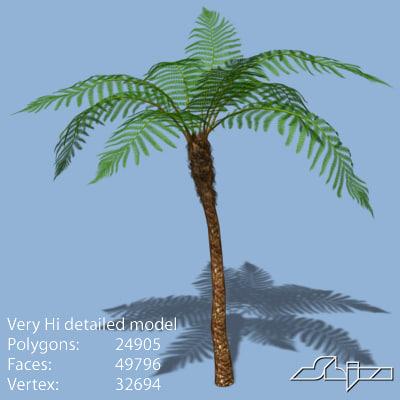 australian tree fern 3d model
