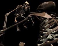 LUCY australopithecus afarensis