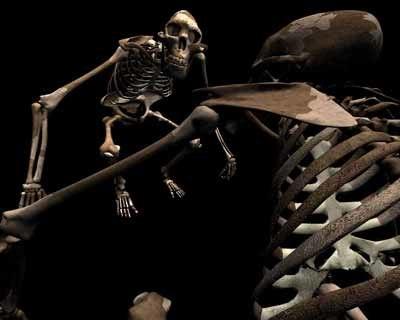 3d model skeleton australopithecus aka lucy