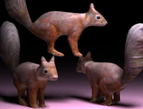max squirrel