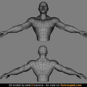 heroic male torso character 3d model
