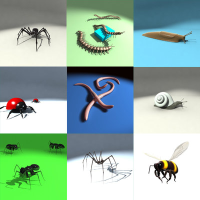 spider insect 3d model