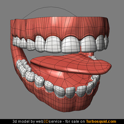 mouth interior teeth tongue 3d model