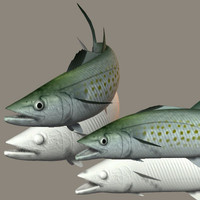 spanish mackerel 3ds