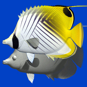 3d model threadfin butterflyfish