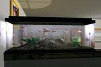 aquarium c4d free