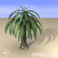 palmtree palms 3d max