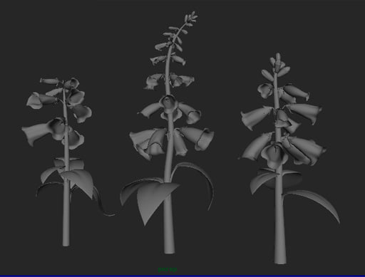 ma foxglove modeled