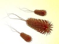 3d model ecoli bacteria coli