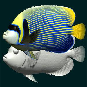 3dsmax emperor angelfish