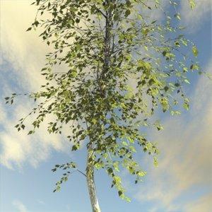 max broadleaf tree leaves