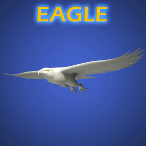 3d eagle animals model