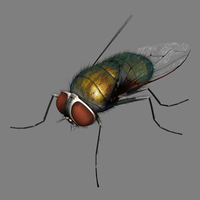 blue bottol fly 3d model