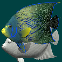 3d model blue angelfish