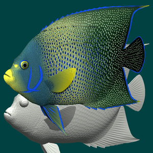 3d model blue angelfish