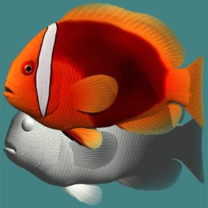 3ds tomato clownfish female