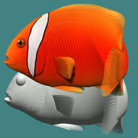 3d tomato clownfish male model