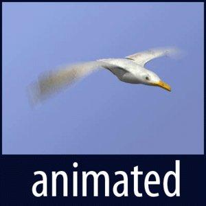 seagull animation gull 3d model