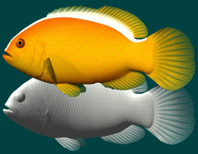 yellow clownfish 3d 3ds