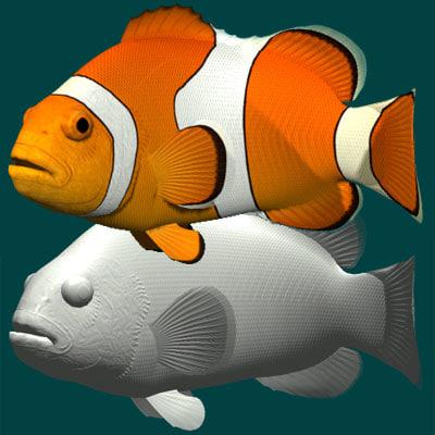 3d clown anemonefish model