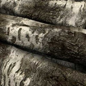 3d birch wood log