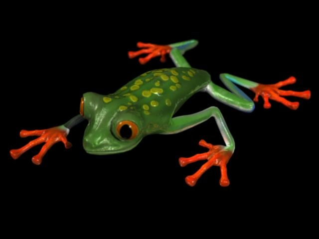 tree frog 3d model