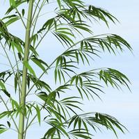 bamboo_c4d.zip