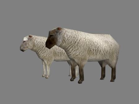 3d sheep 2