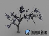 free beech tree 3d model