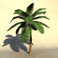 palm_4.zip