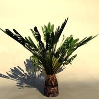 palm_8.zip