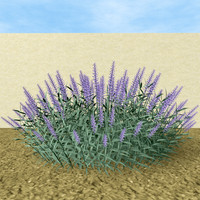 mexican sage bush 3d model