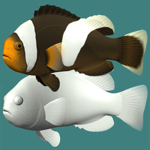 saddleback clownfish 3d 3ds