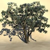 Tropic_tree_15.zip