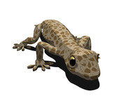 gecko lizard 3d model