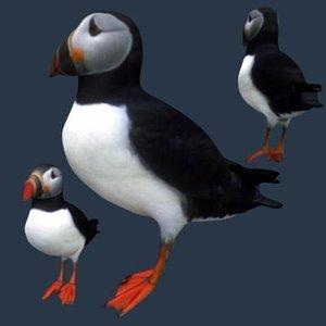 3ds max bird