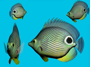 3ds max butterflyfish