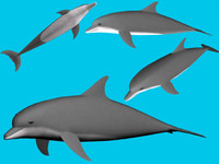 dolphin.max.zip